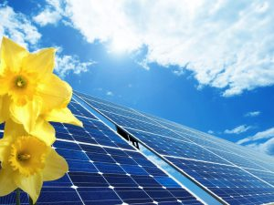 solar-panels-with-yellow-flowers-in-foreground